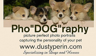 Dog Photography Services in Maine