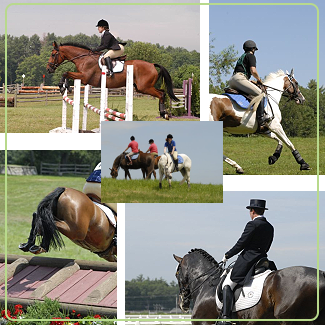 English Riding Equine Stock Photography