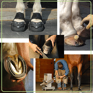 Hoof and Farrier Equine Stock Photography