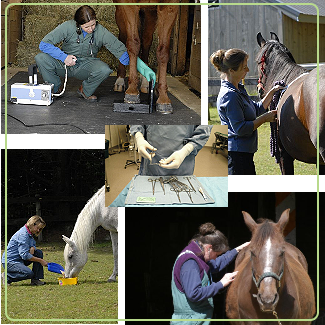 Veterinarian Equine Stock Photography