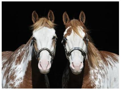 Double Trouble - Horse poster